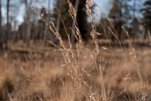 October Grass