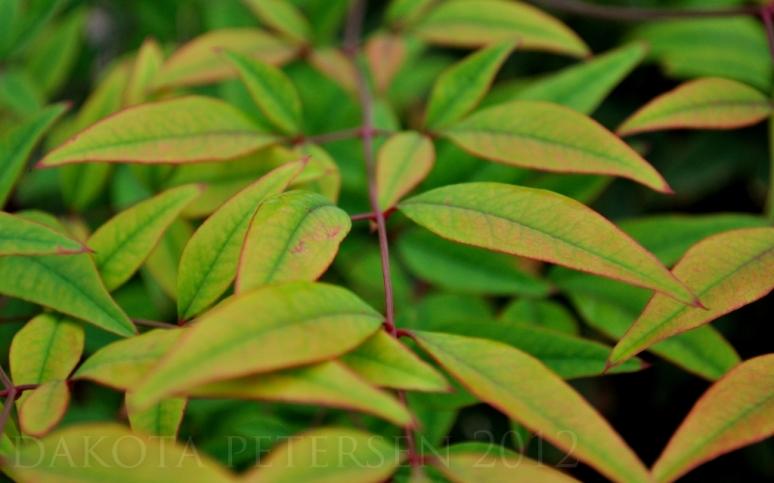 Macro Leaves
