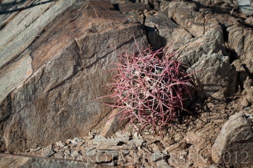 Thin Soil