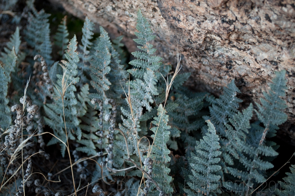 Shadow Ferns