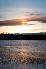 Sun in the Reeds