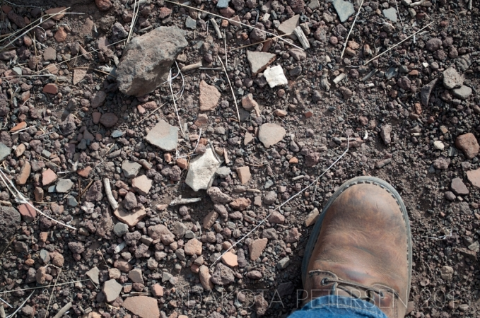 Dust and Ashes