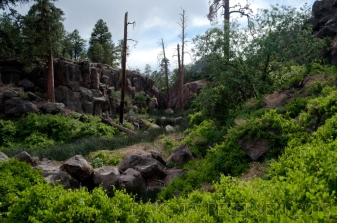 Flood of Green