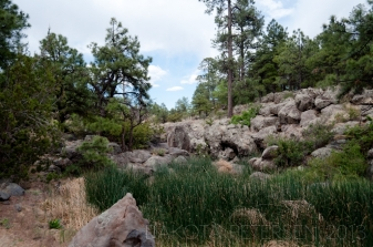 Humble Beginnings