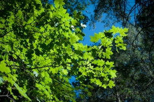 Leaves against the Sky