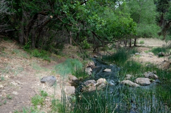Path under the Trees