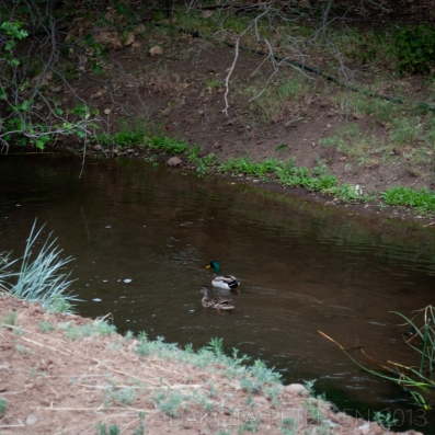 Swimming Along