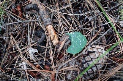 Forest Debris