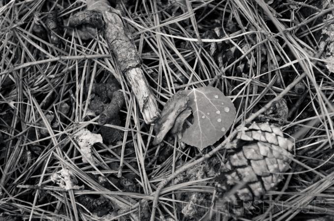 Forest Debris Mono