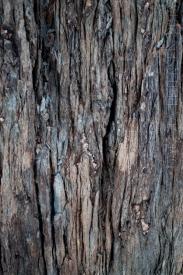 Wood Grain Vert