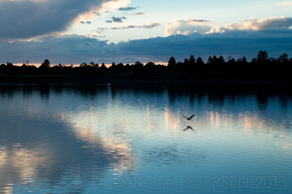 Twilit Heron