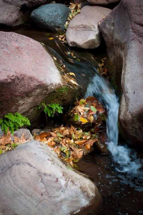 Narrow Fall Vert